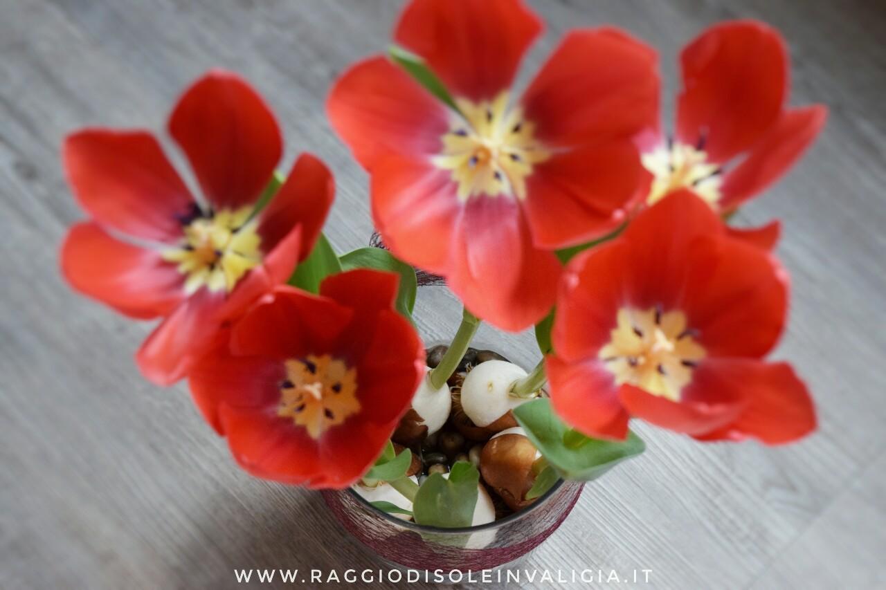come coltivare i tulipani in acqua passo passo